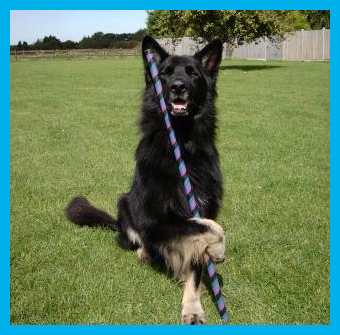 Dog Training Birchington